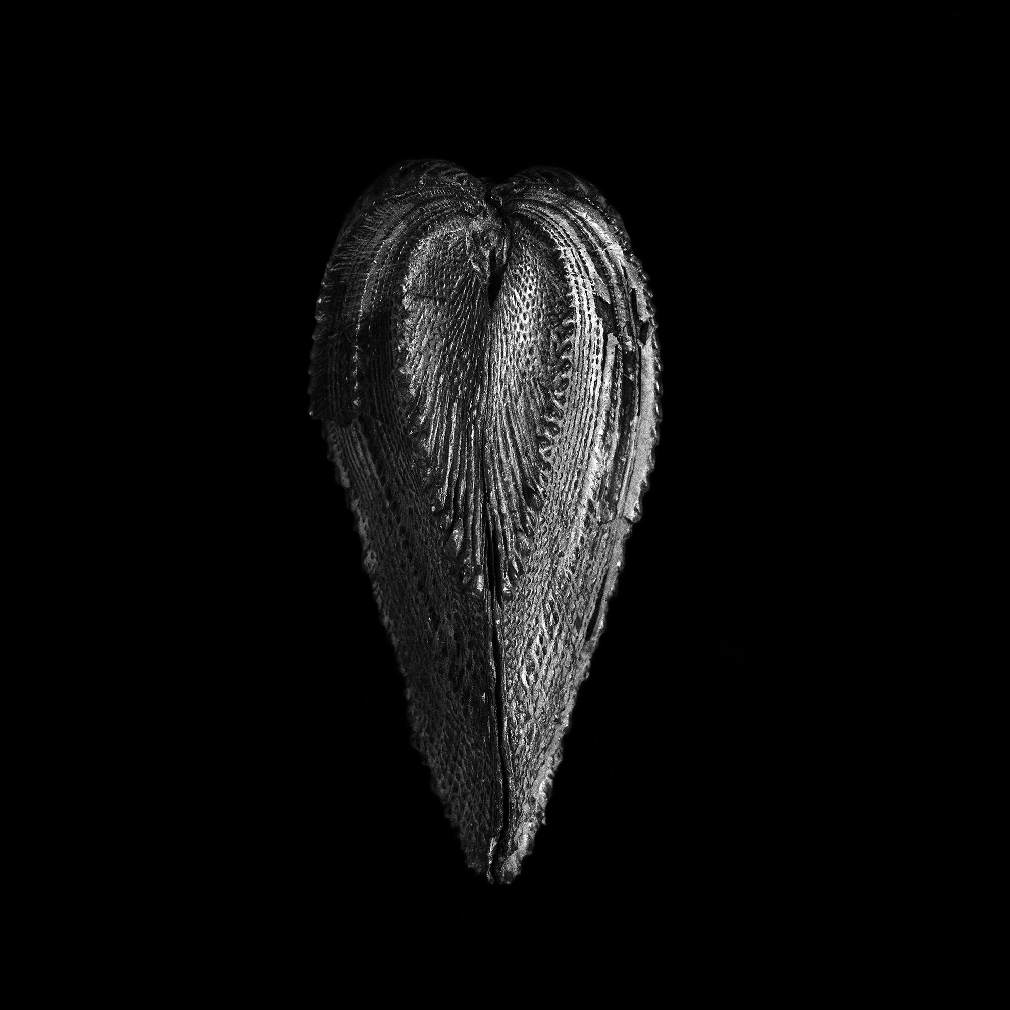 FU Fossils_38_01.jpg