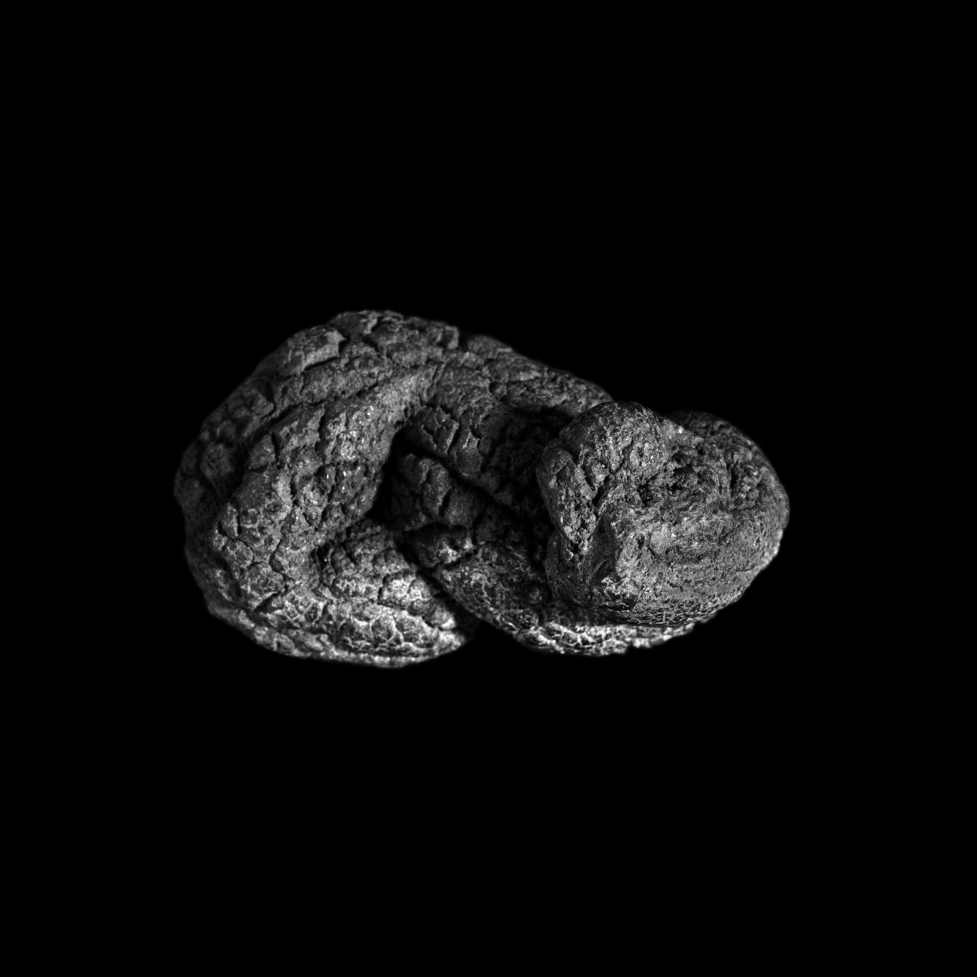 FU Fossils_35_01.jpg