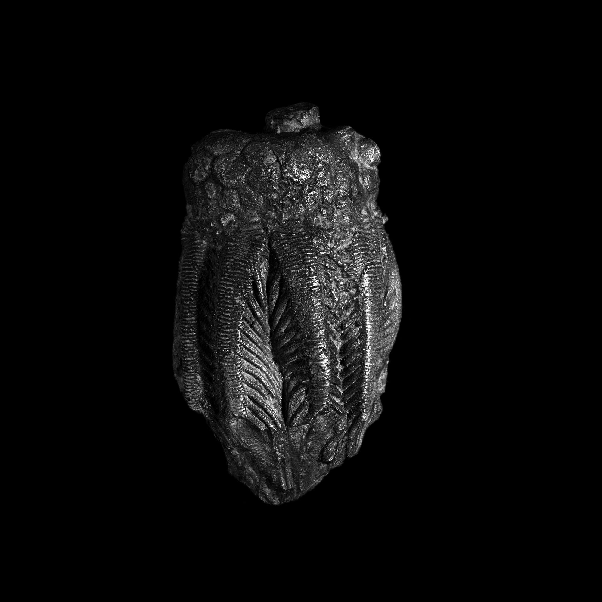 FU Fossils_33_02.jpg