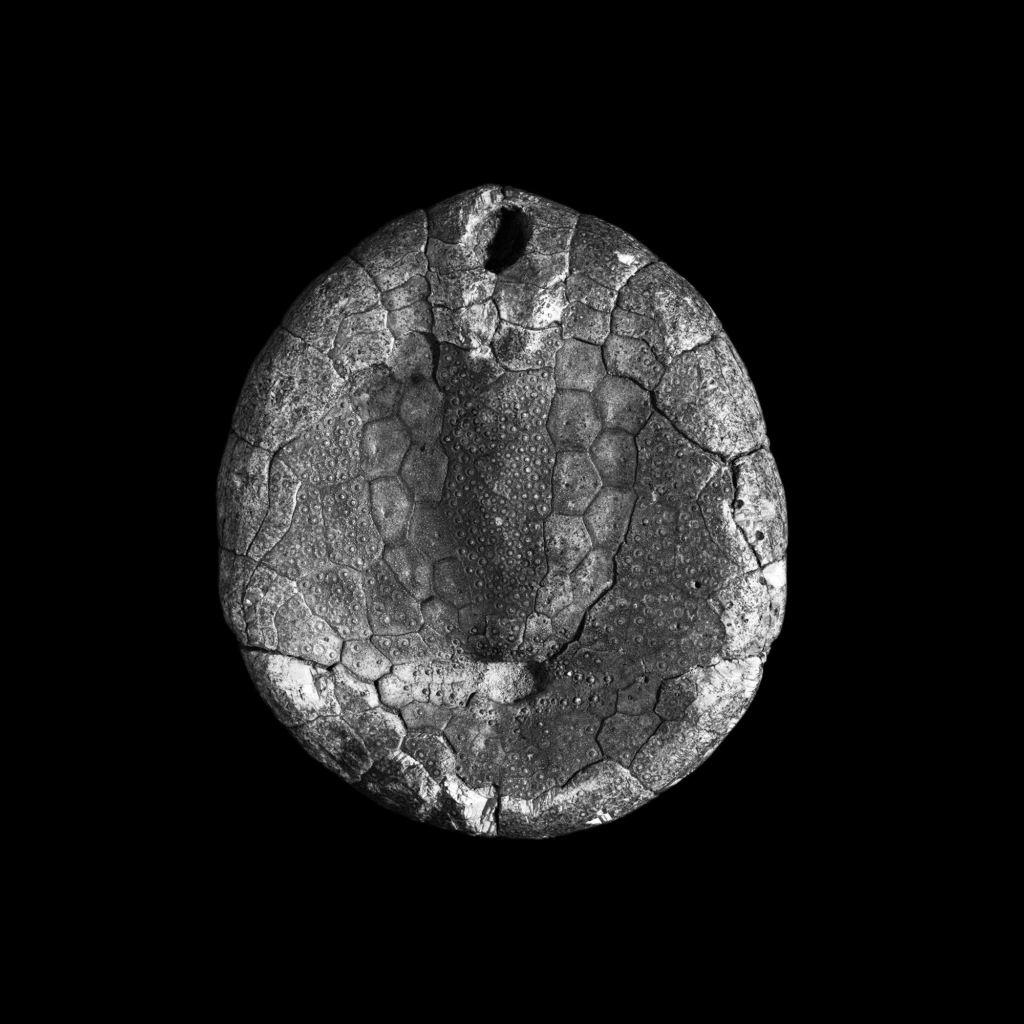 FU Fossils_34_02.jpg