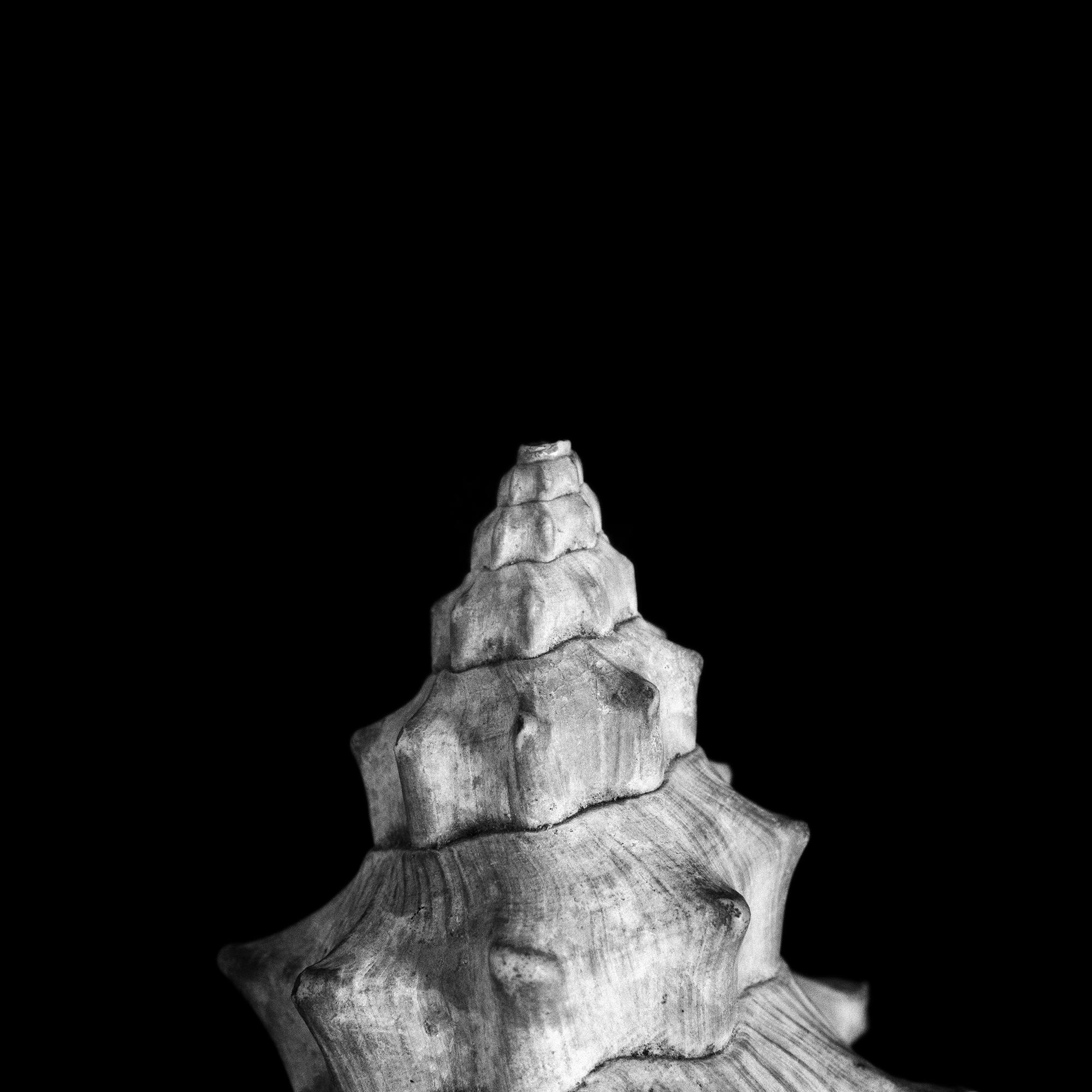 FU Fossils_06_01.jpg