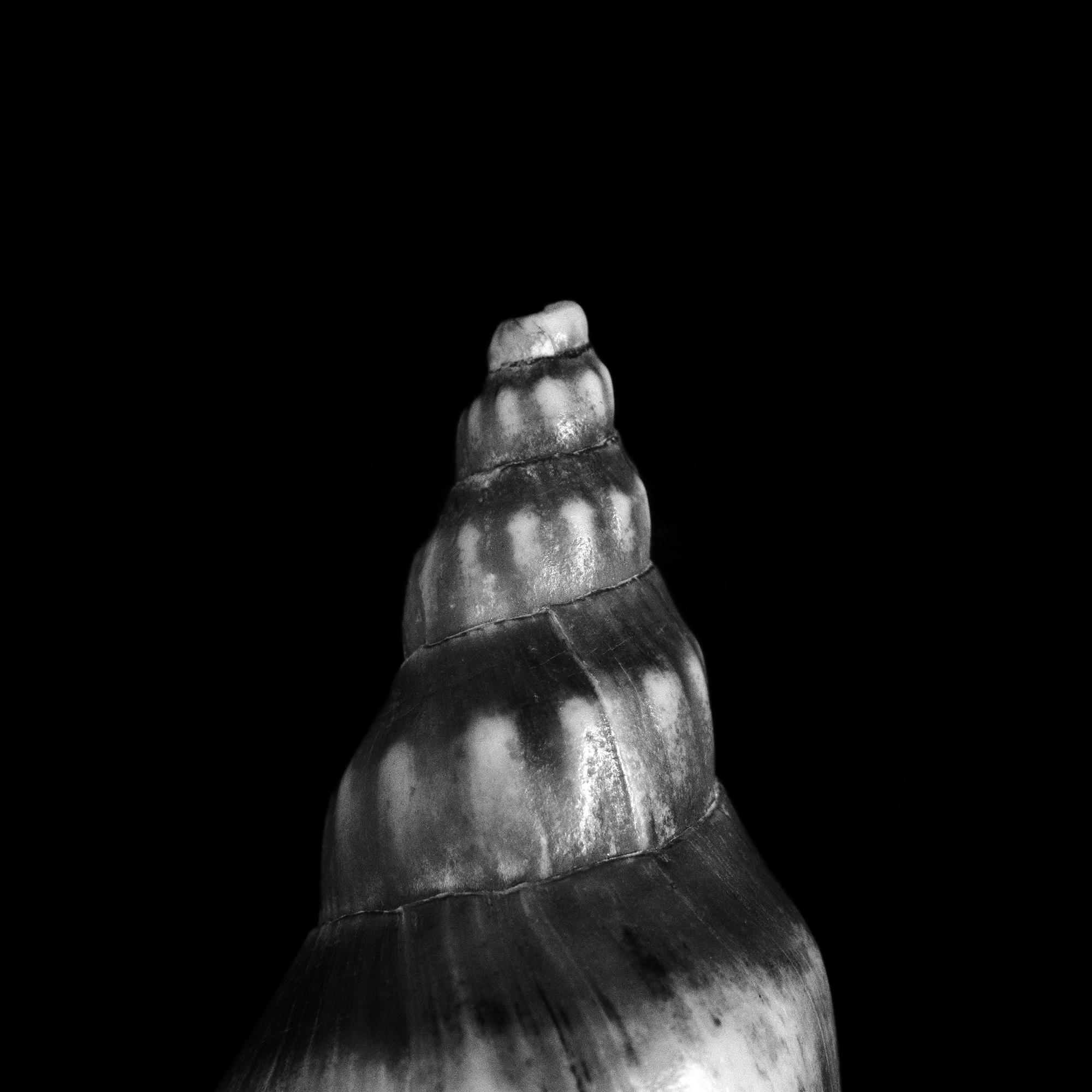 FU Fossils_04_01.jpg