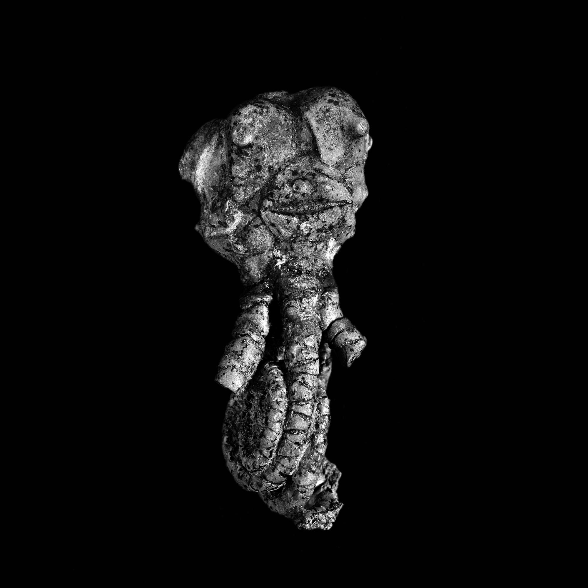 Jimbacrinus bostocki / Perm von Jimb Jimba/Westaustraiien