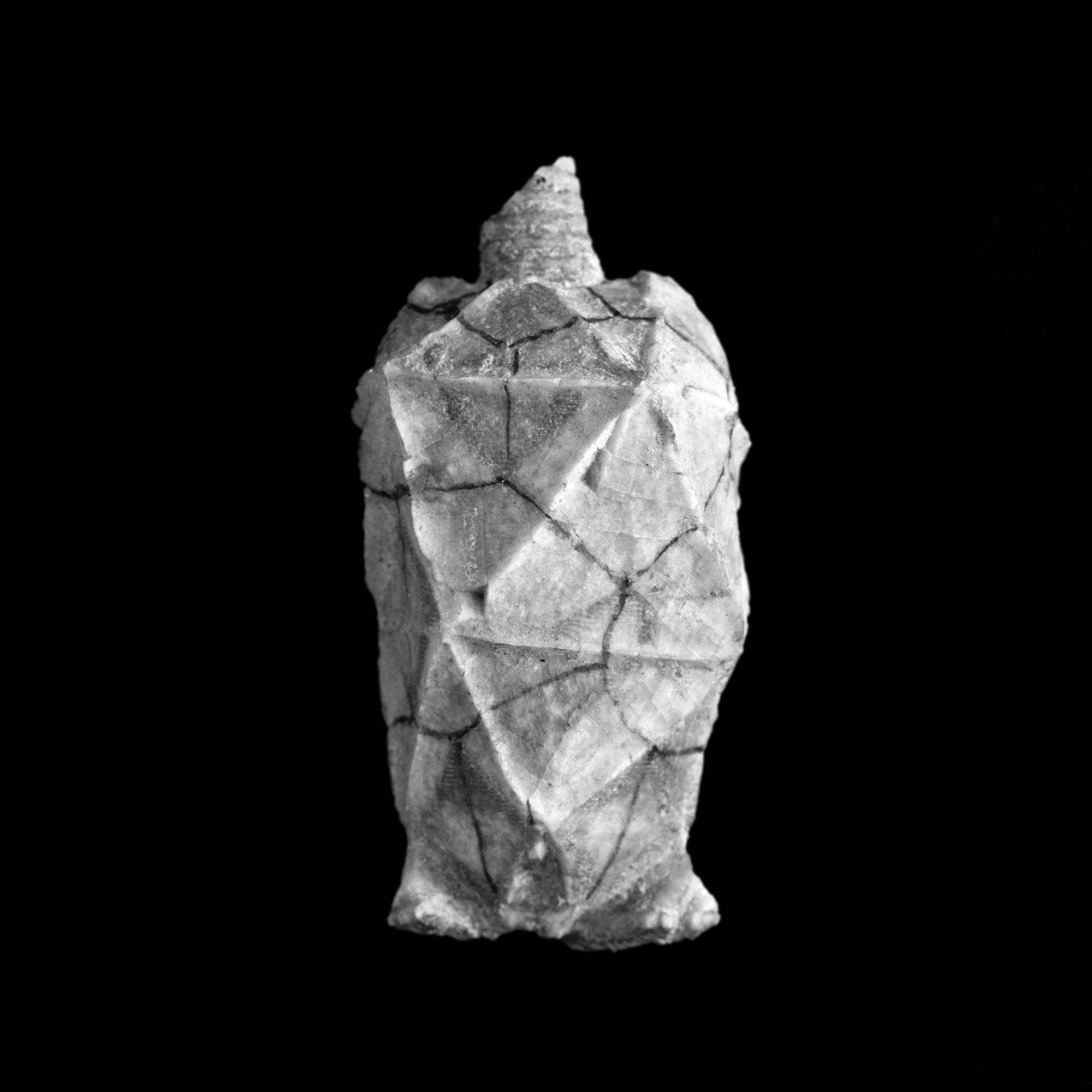Chirocrinus sculptus, Unter-Silur, Jaekel