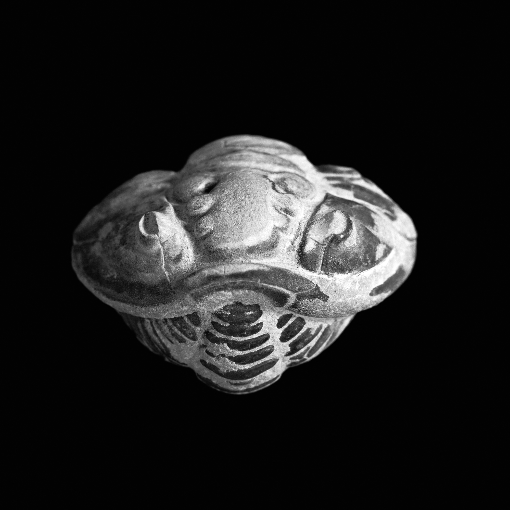 Flexicalymene meeki, Foerste, Oberes Ordovizium, Ohio, U.S.A