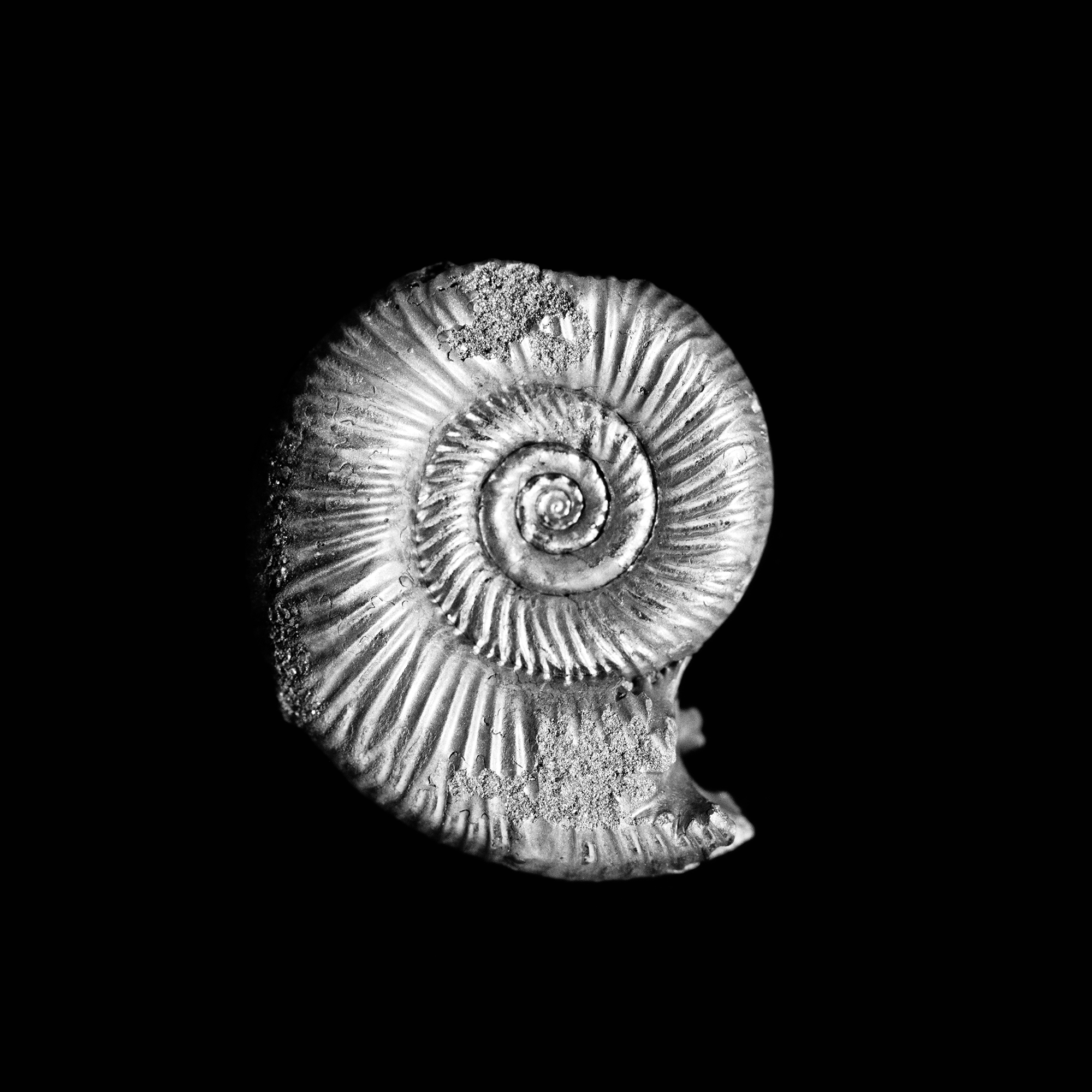 Binatisphnctes mosquensis, Lahusen, Jura, Rjasan, Moskau