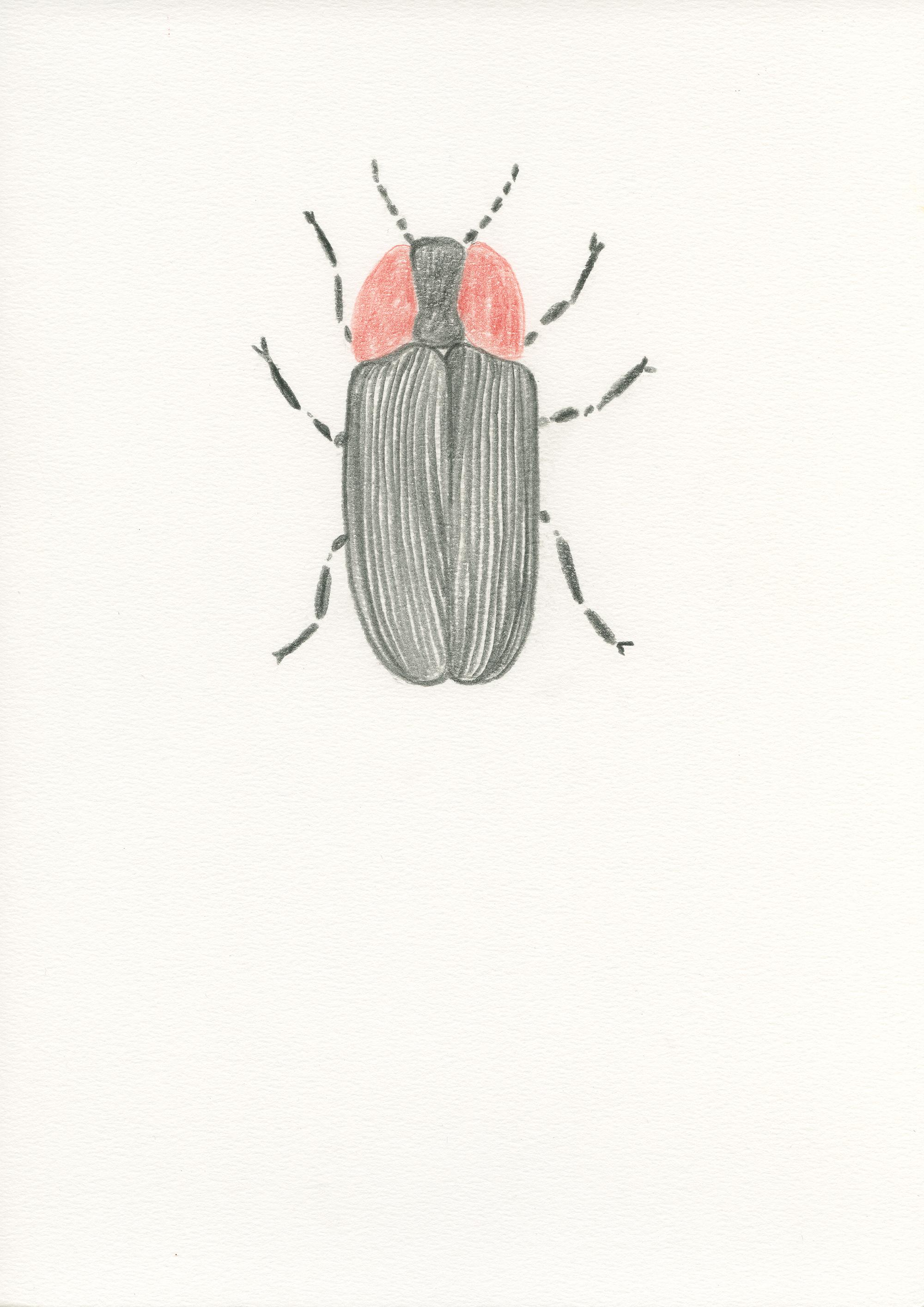 Untitled, 2012, color pencil on paper, 21 x 29,7 cm