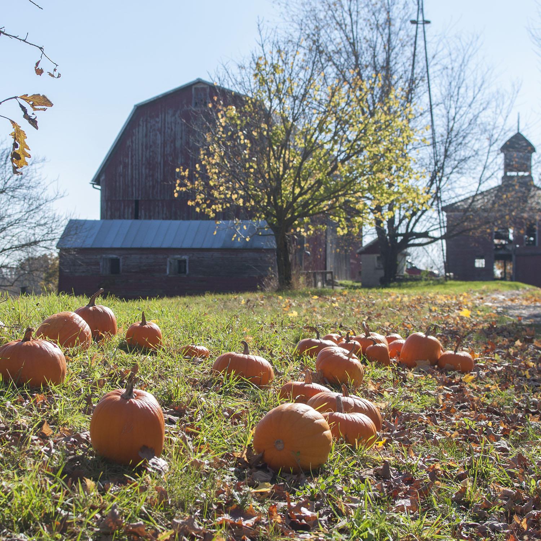 pumpkins and barns.jpg