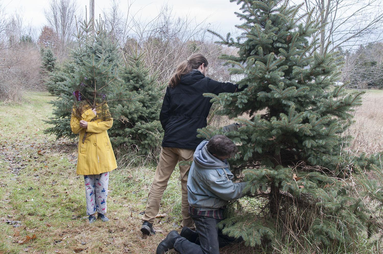 cutting the tree.jpg