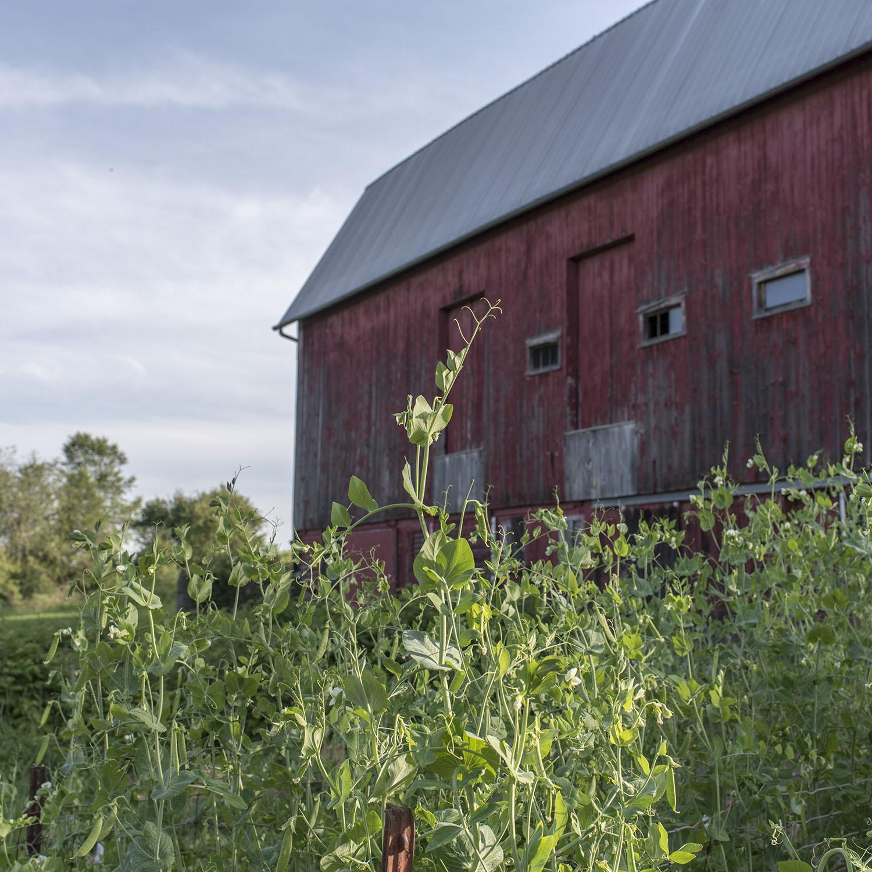 garden barn.jpg