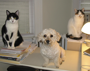 "Before Mark and I had Lily, we had a small dog named Otis. Until recently we also had another cat – Archie's sister, Waifer. One day Otis and Archie and Waifer all decided they would help me write. Then again, they may simply have been staring at me, thinking, ""When's lunch?"""