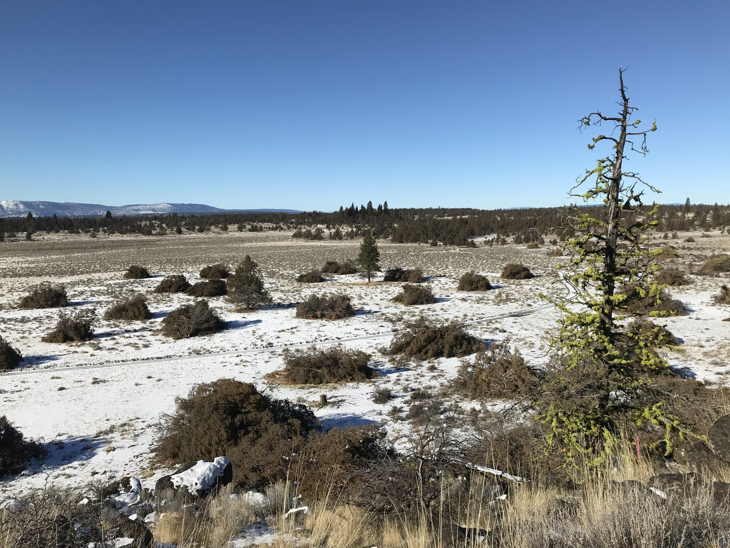 Piles of juniper on acres treated with NRCS EQIP in the Gerber area.