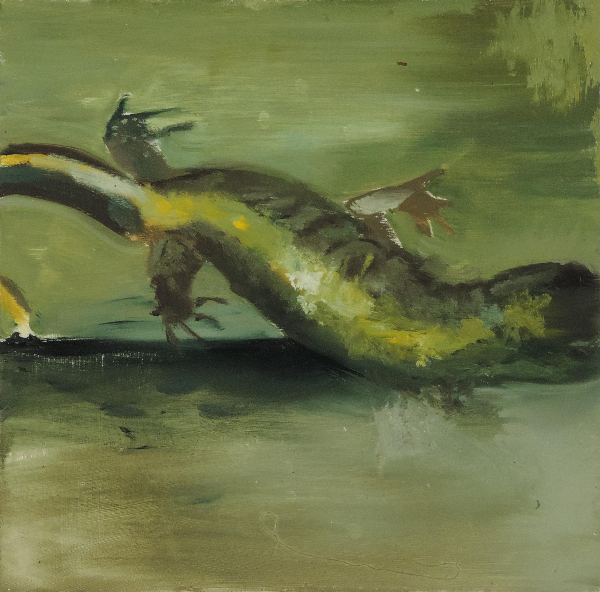Sky Salamander