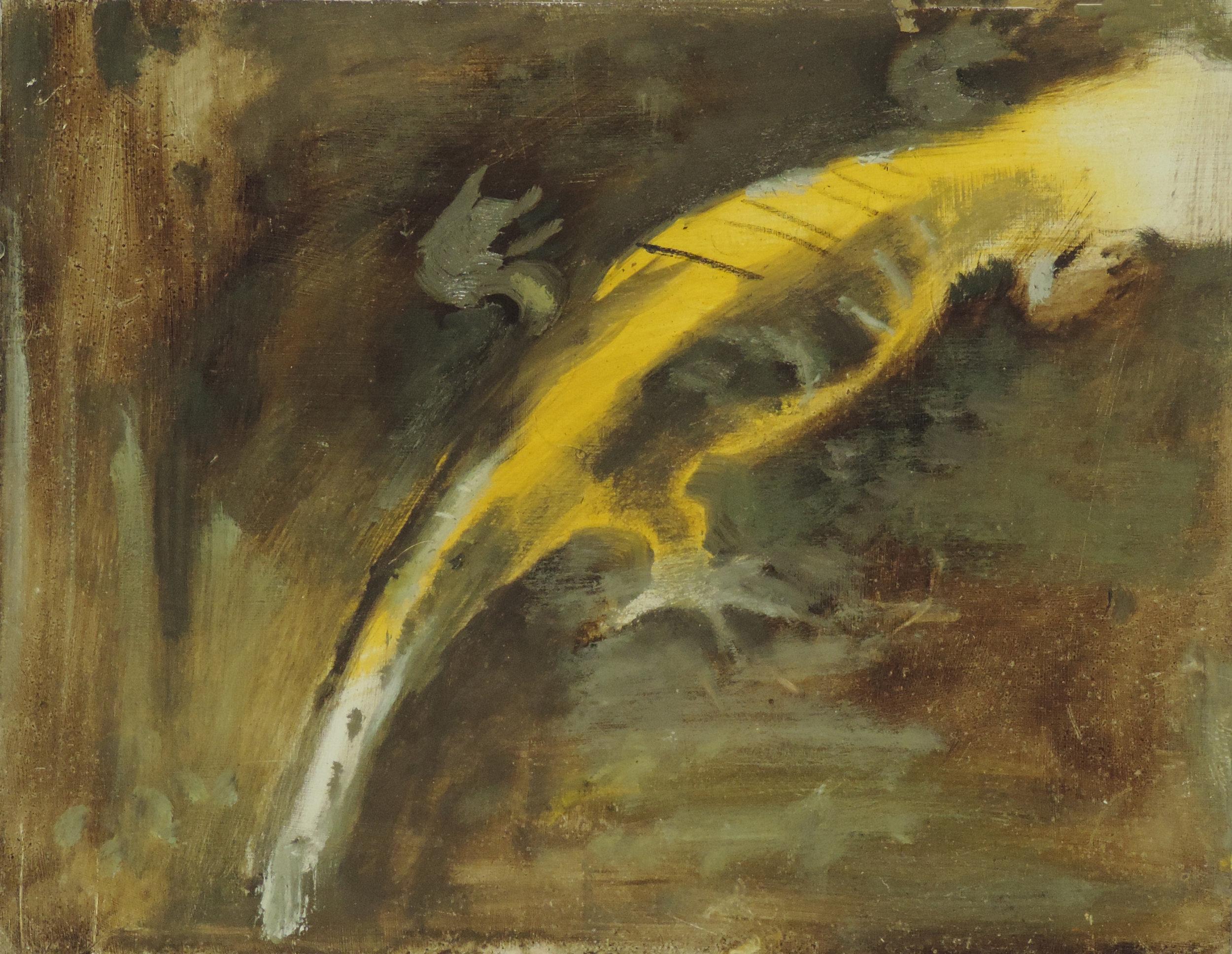 Longtoed Salamander