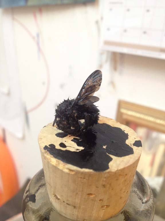 First inking/better position: bumblebee  studio shot, india-ink on bumblebee mounted on cork