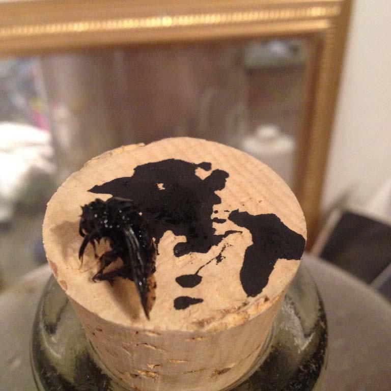 Inking stage: bumblebee  studio shot, india ink on bumblebee mounted on cork