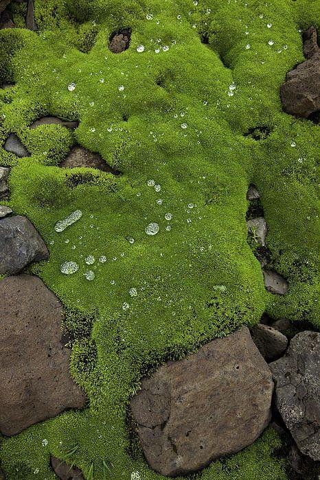 Green _ Grün _ Verde _ Grøn _ Groen _ 緑 _ Emerald _ Brunswick _ Moss _ Colour _ Texture _ Style _ Form _Wet Moss Over Volcanic Rocks Print By Ruben Vicente.jpeg