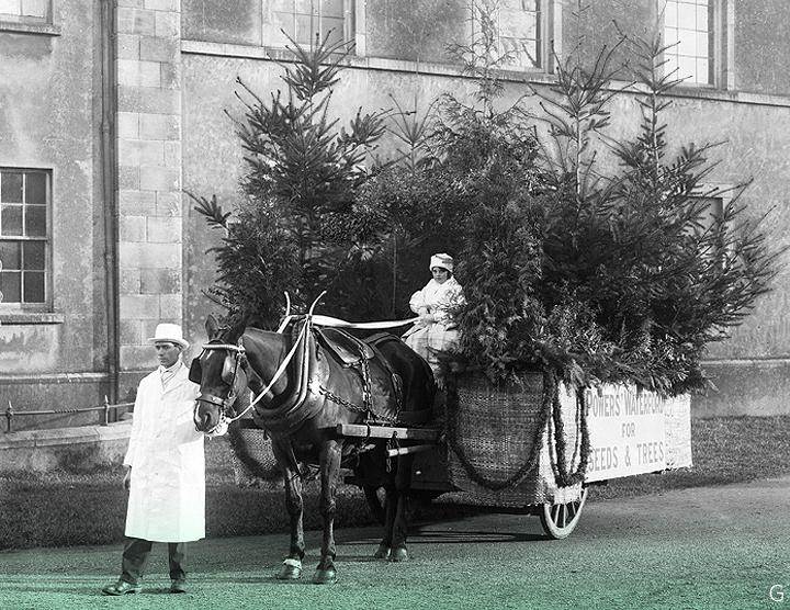 16 декабря 1929 г. // Торговцы семенами Уильяма Пауэра с О'Коннелл-стрит перевозят рождественские елки. Уотерфорд.