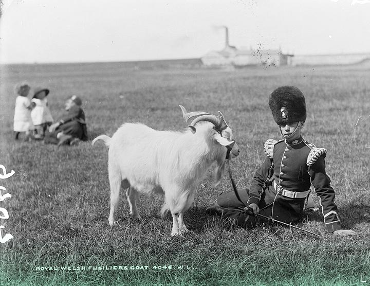 L. Около 1887 г. // Снято недалеко от Фермоя, графство Корк. Это Royal Welsh Fusilier с полковой козой в комплекте с ремешком на гербе.