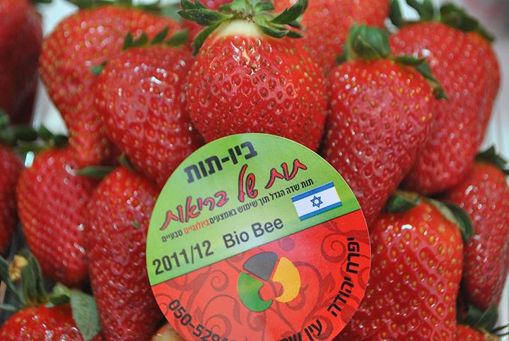 israel-strawberries.jpg