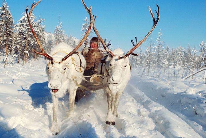 For 1400 years the Eveny reindeer herders of the Russain far East have traveled the taiga and tundra with reindeer