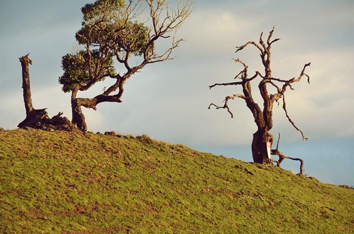 Geometric trees