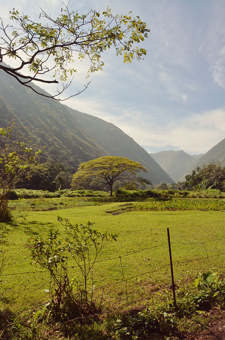The secluded, off the grid Waipi'o Valley