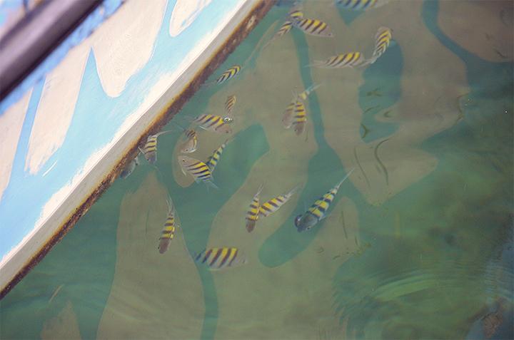 coralcay2.jpg