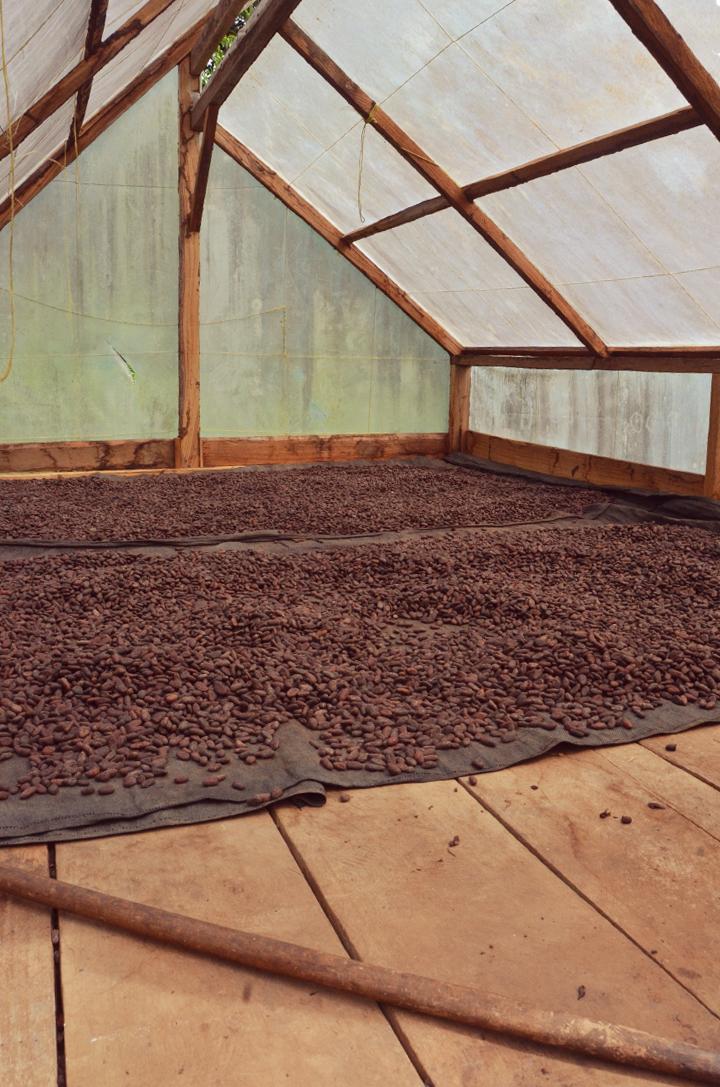 Oribe chocolate farm, drying beans