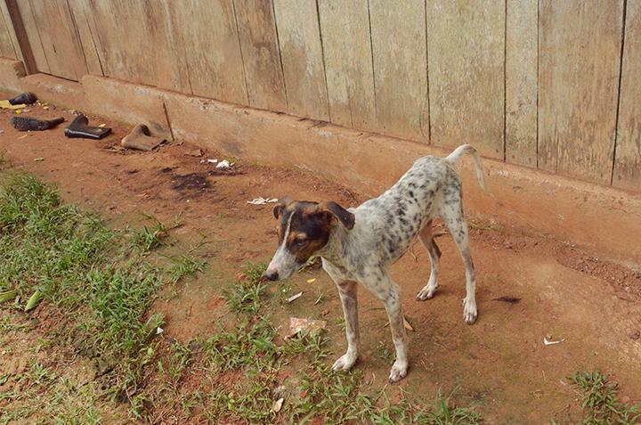Oribe farm dog