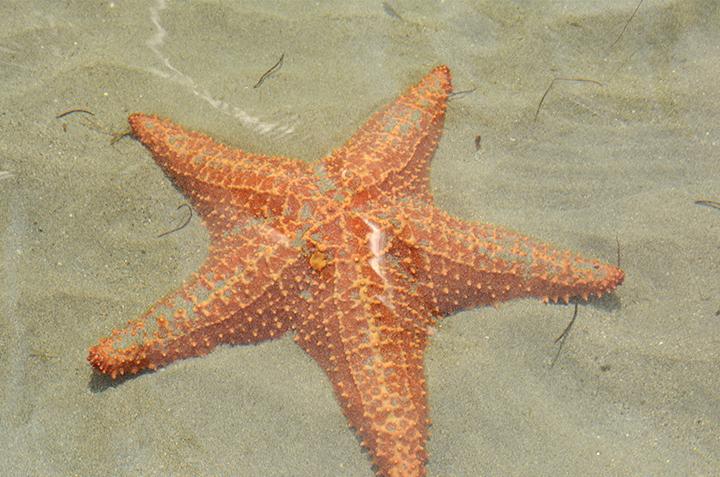 starfish3.jpg