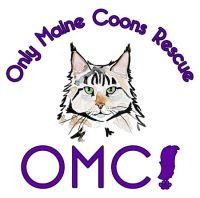 Only Maine Coon Rescue  110 Austin Avenue Absecon, NJ 08201  Info@omcrescue.org    http://www.omcrescue.org/