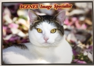 SCENES IMAGE SPECIALISTS  BOB DIVITO   PETSCENES@COMCAST.NET   CAT PORTRAITS / PHOTOGRAPHY  732-388-9194