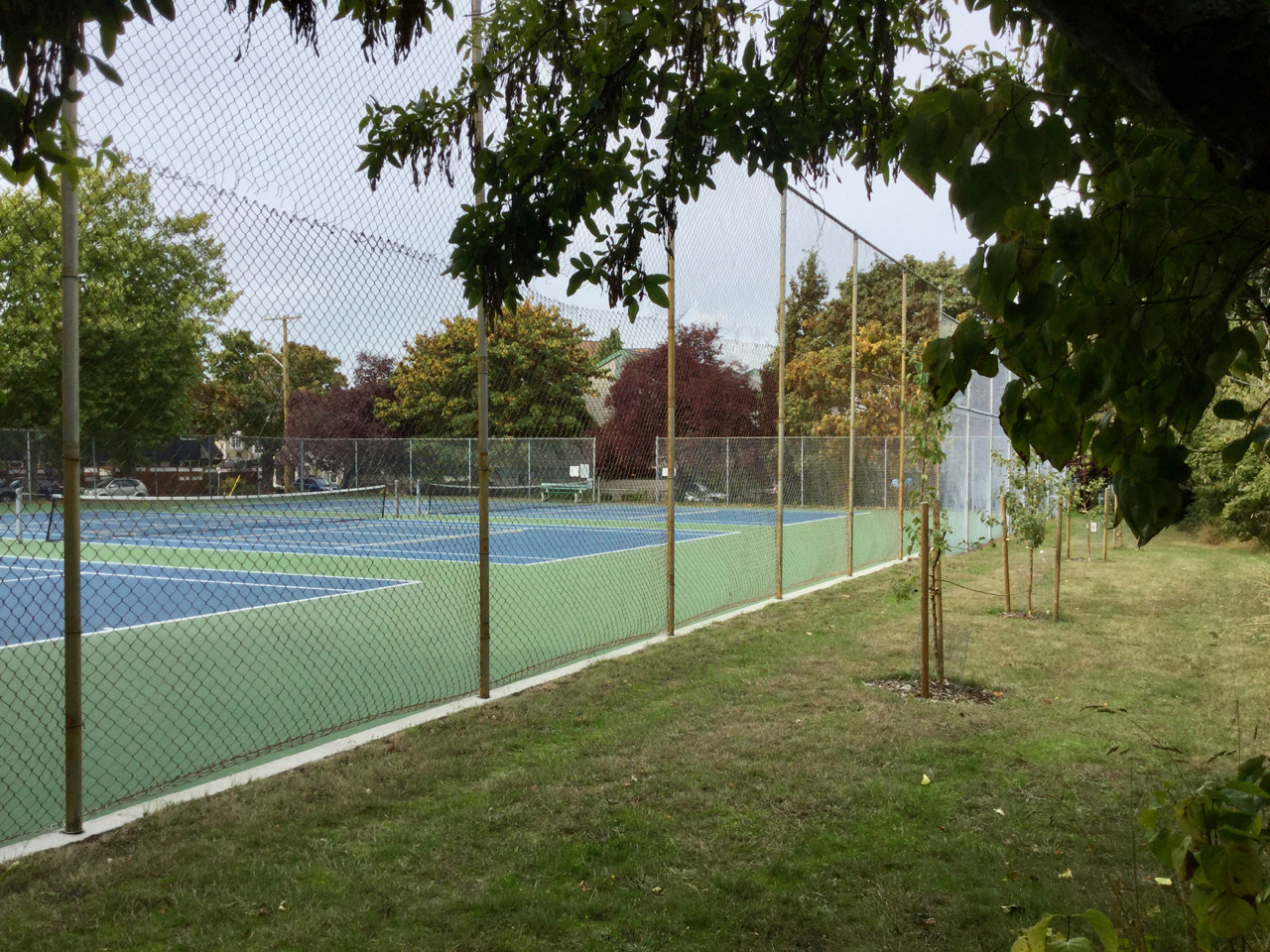 The tennis courts and fruit trees at Charles Redfern Green described in the letter above. Photo by Robert Hawkes.