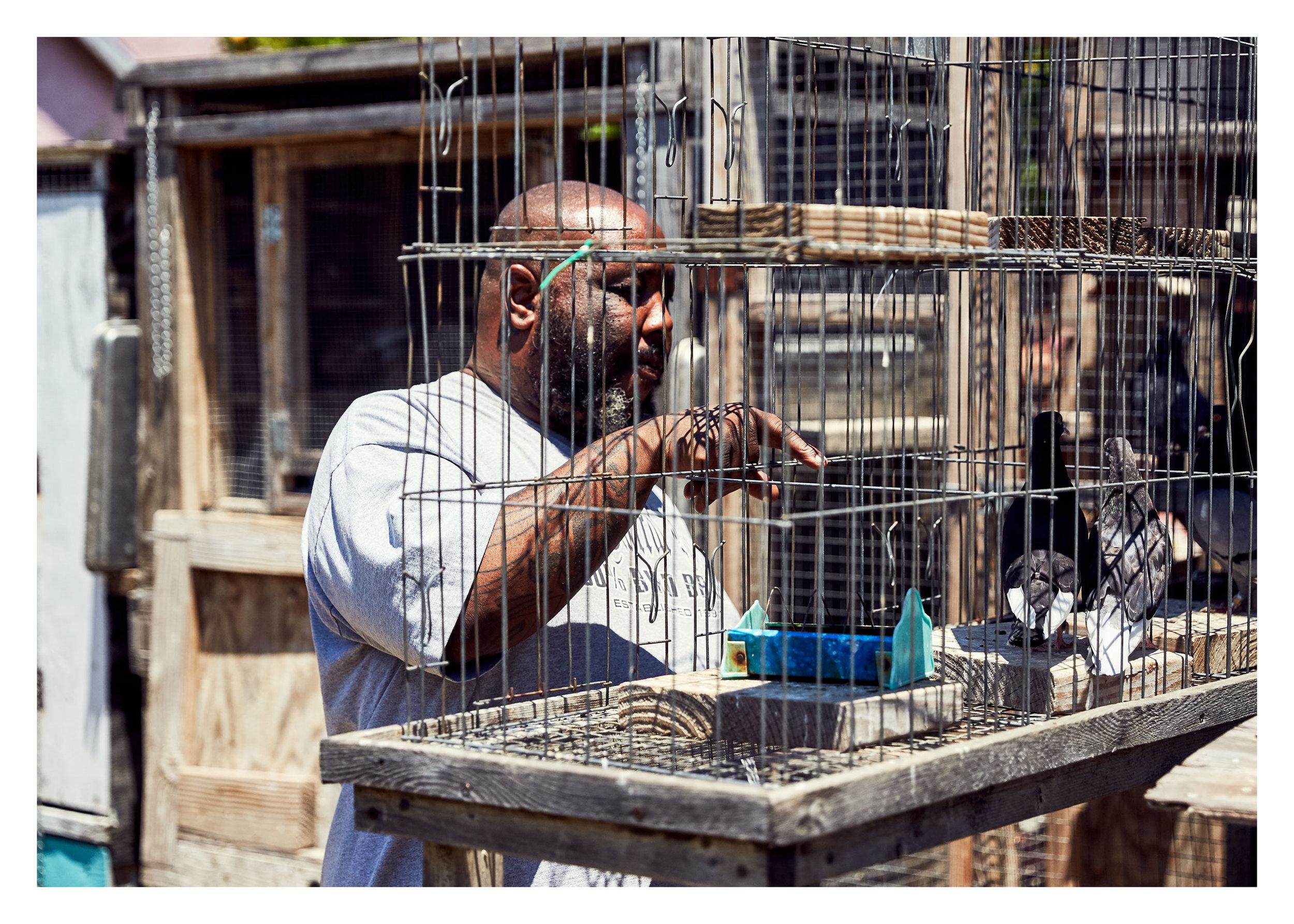 PIGEONKINGS_01950_web.jpg