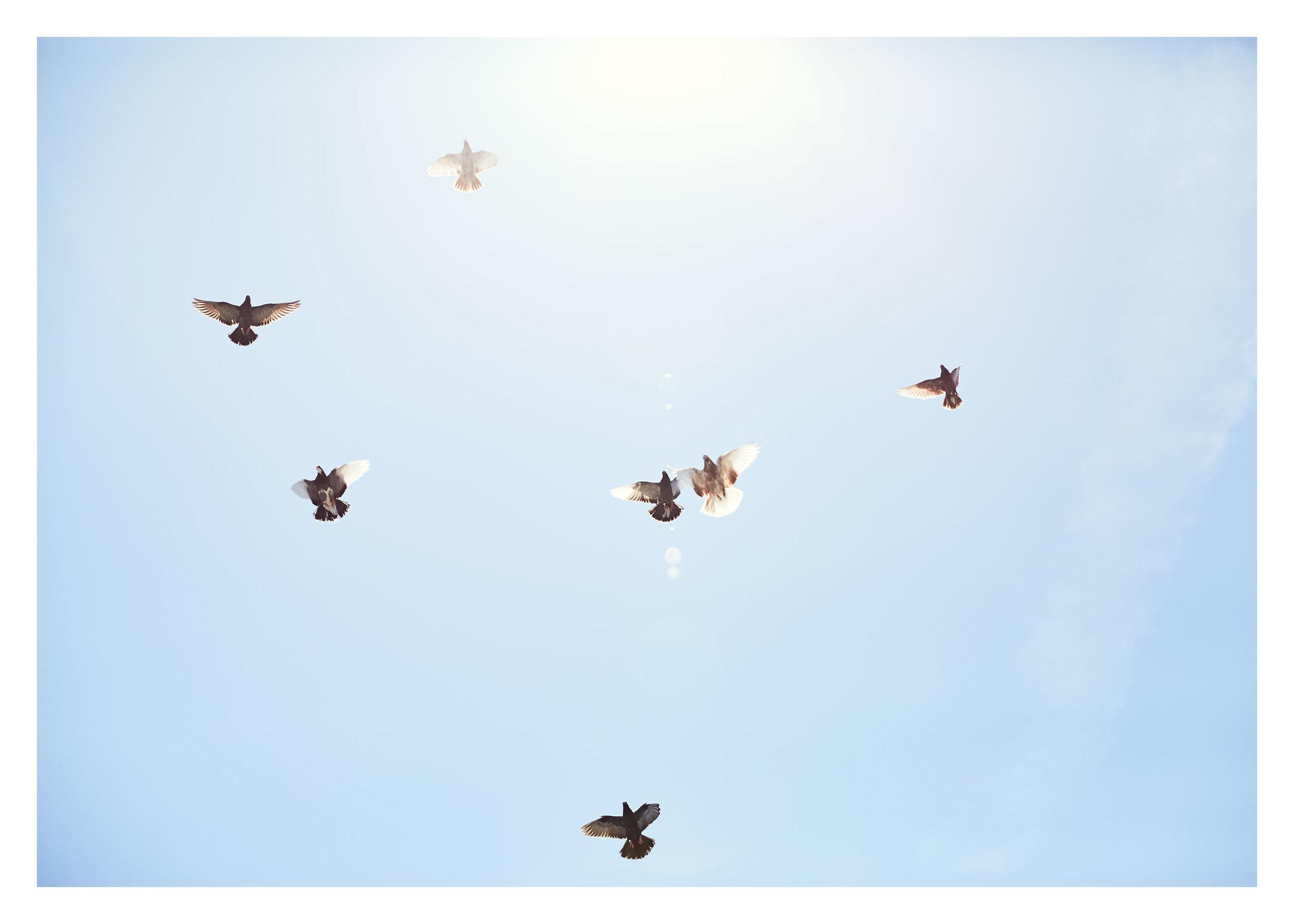 PIGEONKINGS_02212_webfnl.jpg