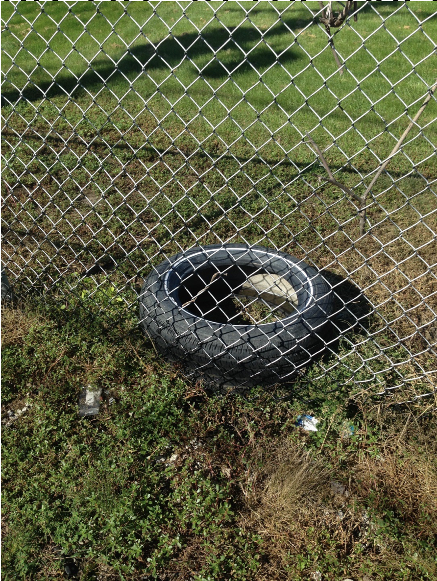 Scrap Tire in Back Yard.png