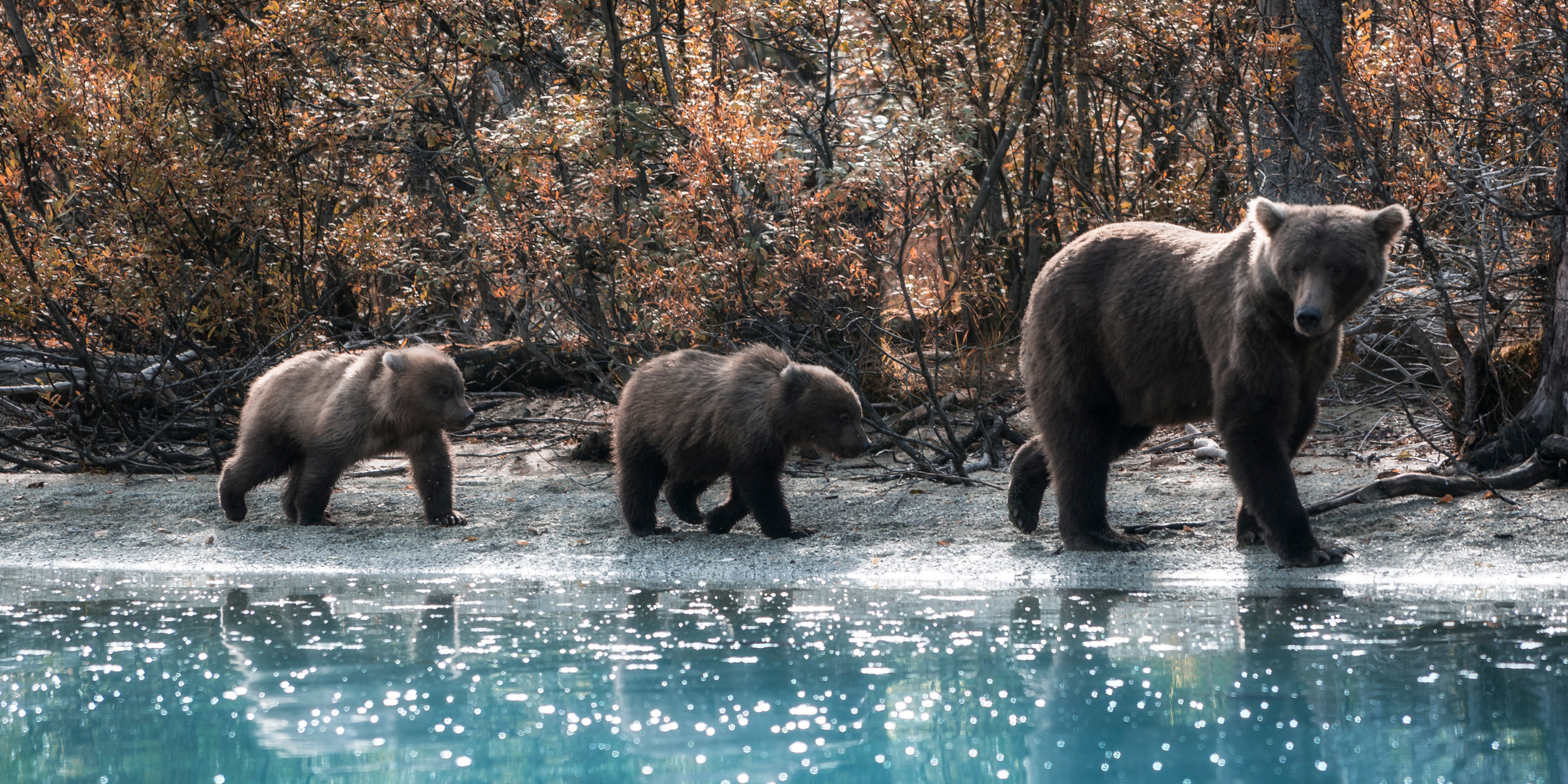 Alpha Imaging Collective Does Alaska