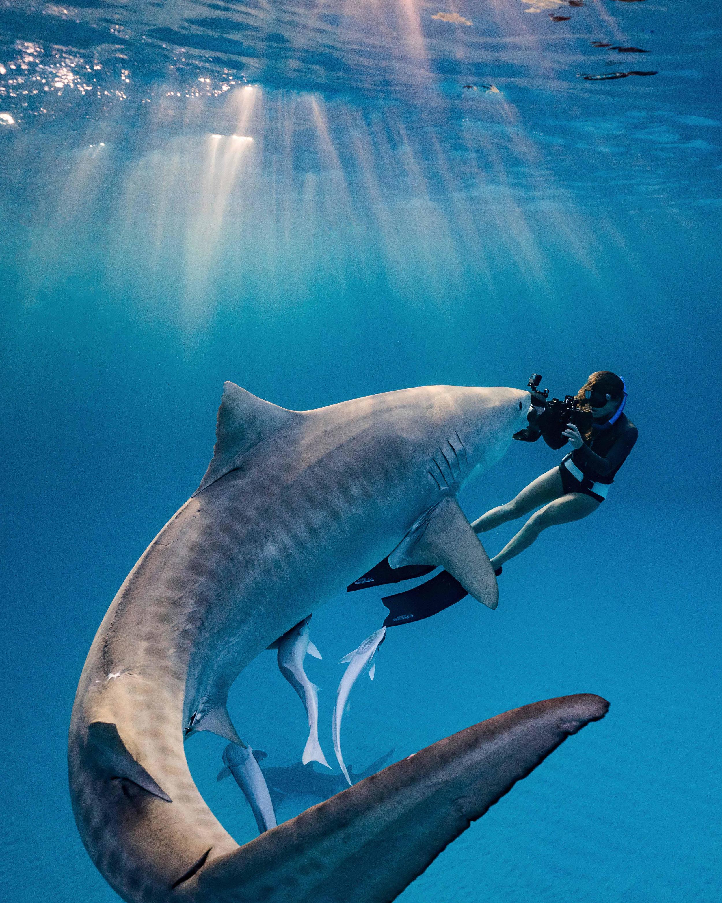 sharks_florida_underwater_photography.jpeg