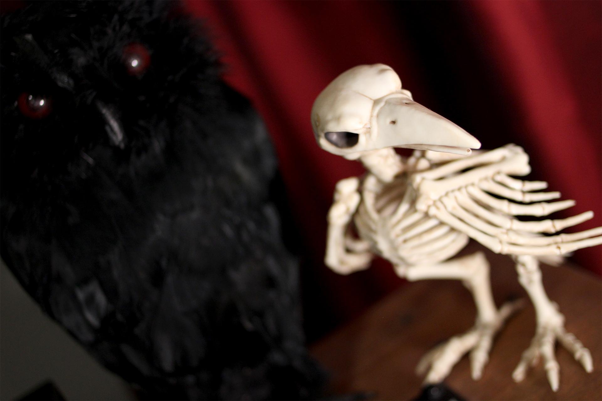 Skele Bird.jpg