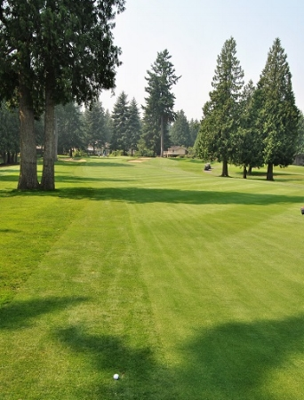 I just missed the fairway on the seventh hole, but still had tree problems on the approach to the green.