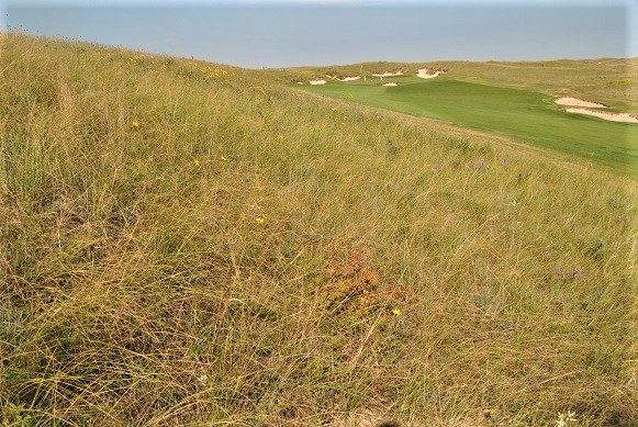 That low drive off the eighth tee box ended up left of the fairway on a slope in the deep fescue.