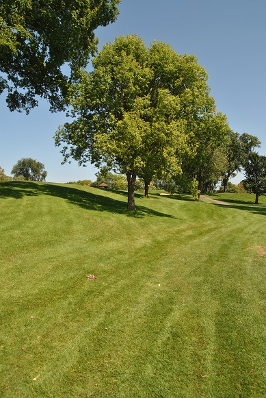 My drive on the 7th hole was way left. I hit over the trees to advance toward the green.