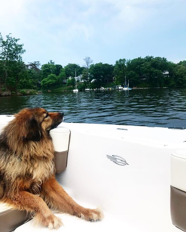 this is lucy lucy sleeps on boats be like lucy 🐶