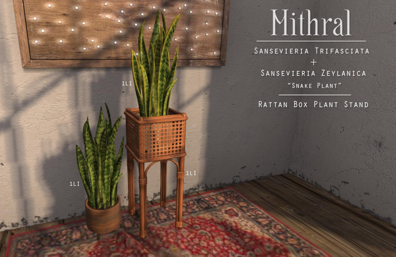 Mithral * Sansevieria Trifasciata / Sansevieria Zeylanica / Rattan Box Plant Stand