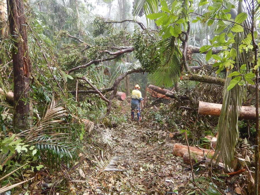 Eungella-National-Park-cleanup-after-Cyclone-Debbie.jpg
