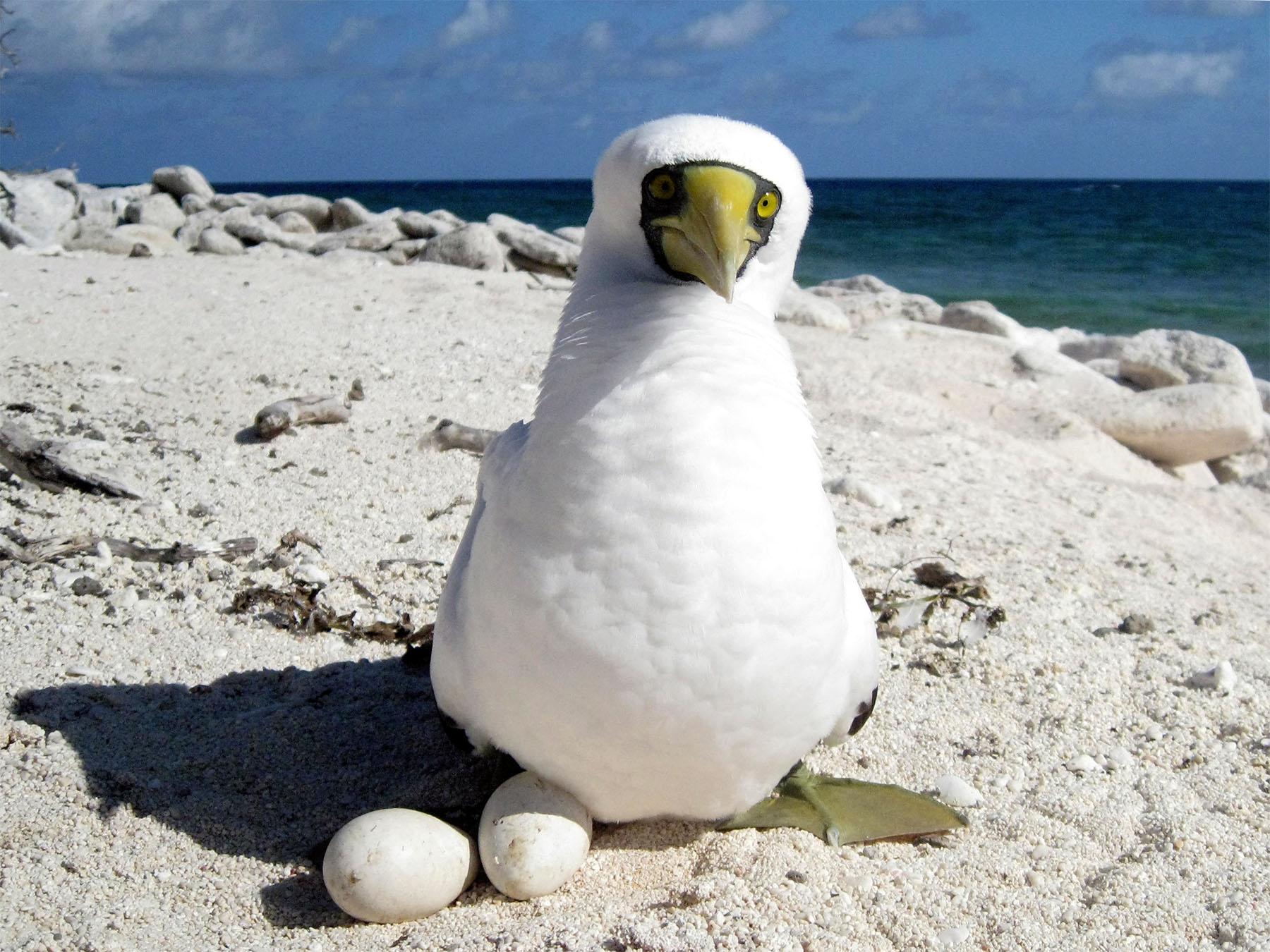 Coral-Sea-seabird.jpg