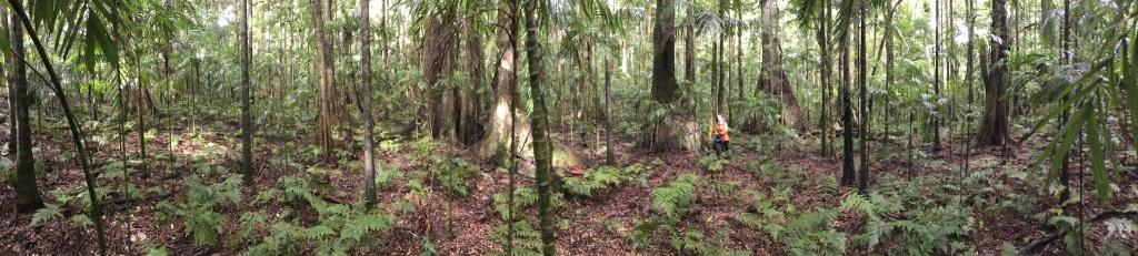 Open Rainforest of Gainsdale Development sites