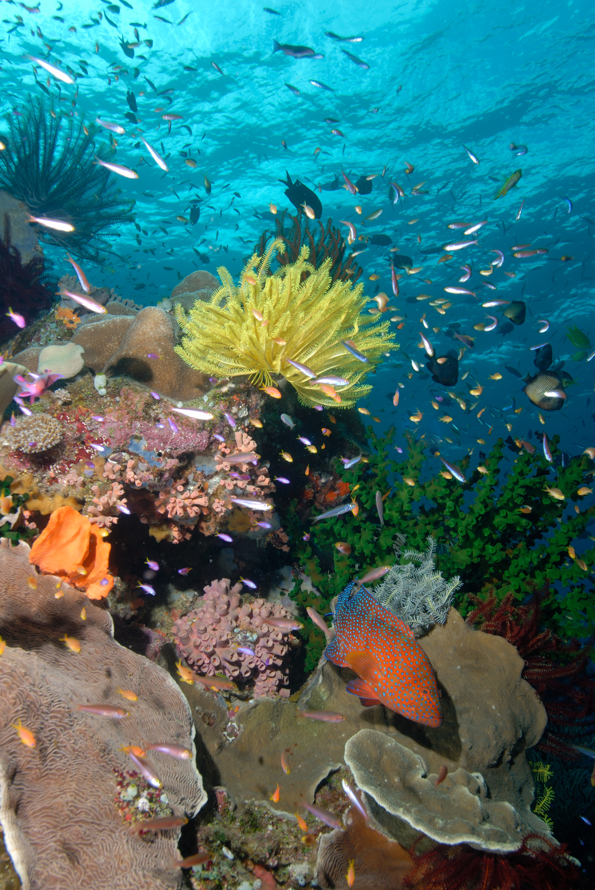 Coral Sea underwater beauty 171111Protect Our Coral Sea Lucy Trippett.jpg