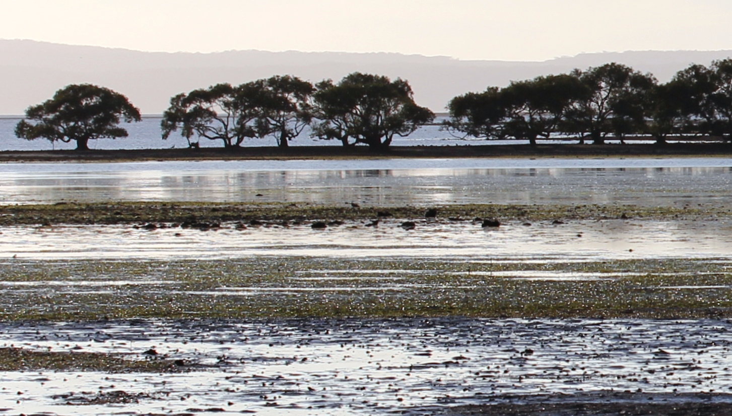 Cassim Island at Toondah Harbour, a wetland at risk (Panthus Wikimedia Commons)